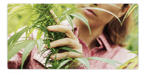 Can CBD Relieve Pain? – What's the Science?