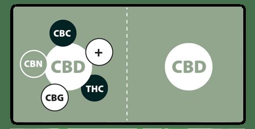 What is Full Spectrum CBD Oil?