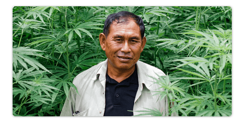 Is CBD Legal in Thailand?